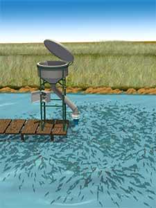 Alipez colombia rotor oxigenador de estanques y for Productos para estanques de peces
